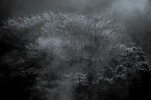 湯気に霞む枝雪の素材 [FYI00229113]
