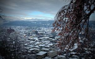 雪桜「秩父市街地を眺める」の素材 [FYI00229251]