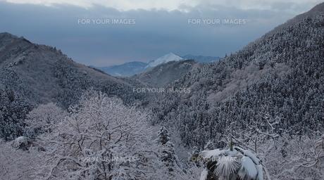 雪の飾られた秩父武甲山の素材 [FYI00229392]