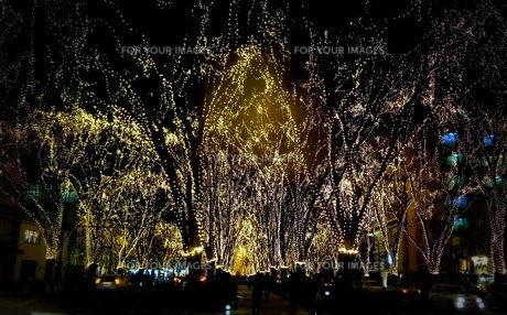 仙台光のページェント光の束の写真素材 [FYI00229624]