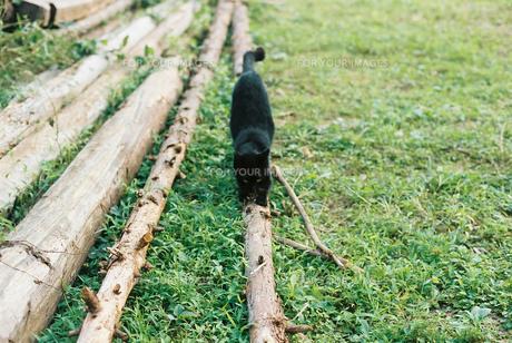 孤独な猫の写真素材 [FYI00229694]