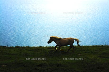 岸壁を駆ける野生馬の素材 [FYI00229773]