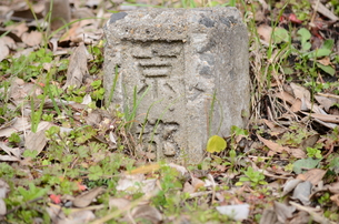 kyoto の写真素材 [FYI00229842]