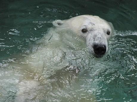 いっしょにに泳がないかい?の写真素材 [FYI00229910]