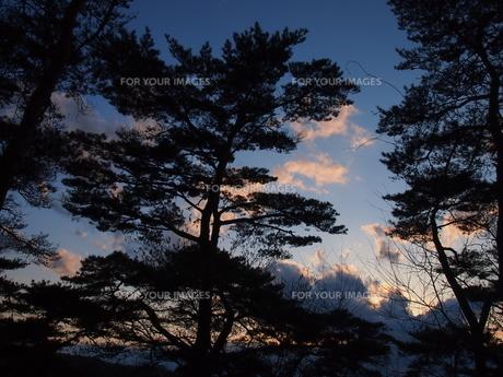 松と夕暮れの写真素材 [FYI00230019]