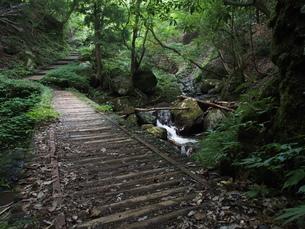 天滝のハイキングコースの写真素材 [FYI00230053]