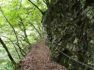 天滝のハイキングコースの写真素材 [FYI00230056]
