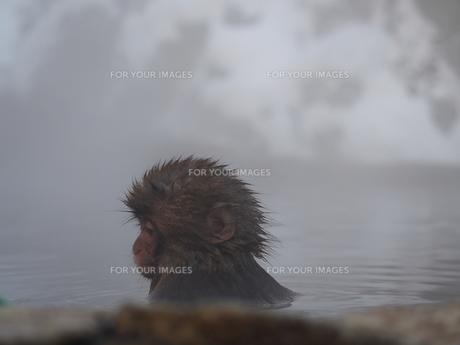 地獄谷温泉の素材 [FYI00230124]