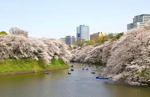 千鳥ヶ淵の桜の写真素材 [FYI00230228]