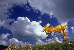 高原の夏の写真素材 [FYI00230284]