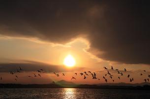 落日と水鳥の飛翔の写真素材 [FYI00230467]