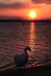 落日の筑波山と白鳥の写真素材 [FYI00230468]