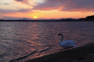 落日の筑波山と白鳥の写真素材 [FYI00230480]