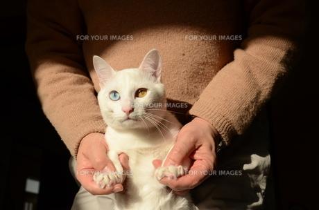 操られる猫の写真素材 [FYI00230650]