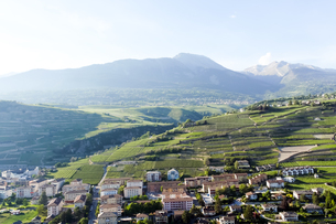 スイス、シオンのブドウ畑 の写真素材 [FYI00230919]