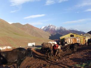 パミール高原の放牧の写真素材 [FYI00230929]
