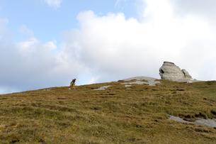 プチェジ山の奇岩とイヌ の写真素材 [FYI00230987]