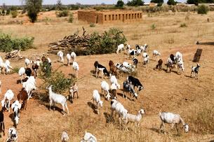 マリ、国境周辺の村の写真素材 [FYI00231014]