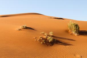 ナミブ砂漠の風紋の写真素材 [FYI00231074]