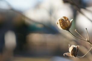 冬の植物の素材 [FYI00231118]