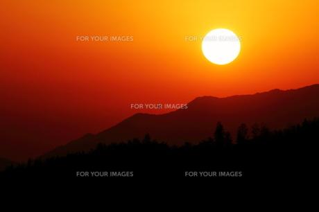 オレンジの空と野鳥の写真素材 [FYI00231223]