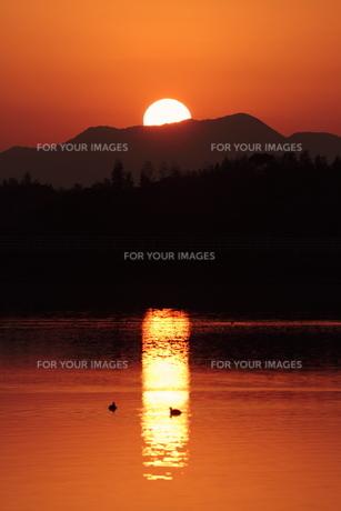 オレンジロードを水鳥が泳ぐの写真素材 [FYI00231227]