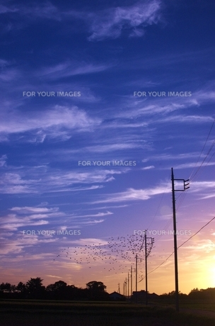 すじ雲のある夕暮れの写真素材 [FYI00231281]