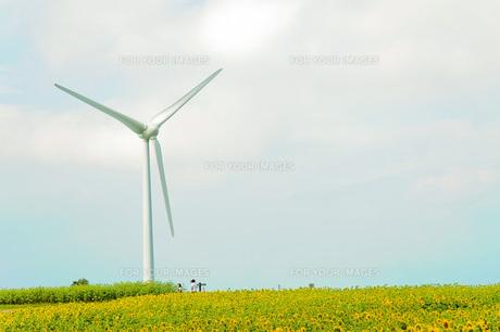 布引高原の風車と向日葵の写真素材 [FYI00231319]