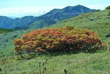明るい緑や橙があなたの肩をそっと押してくれるでしょう 暑中見舞いの写真素材 [FYI00231334]