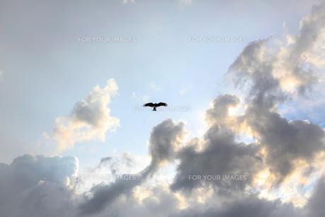 雲と鷹の写真素材 [FYI00231359]