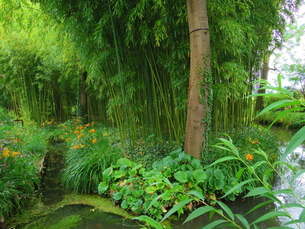 フランスの日本庭園の素材 [FYI00231392]