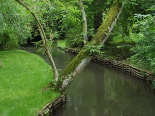 フランスの日本庭園2の素材 [FYI00231401]
