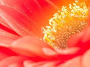 ソフトな光に包まれた花の生命感の写真素材 [FYI00231527]