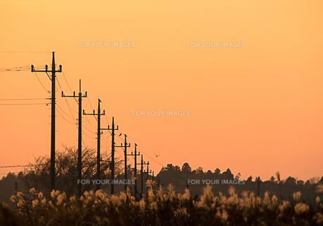 夕焼け空のすすき野原に電柱の列の写真素材 [FYI00231540]