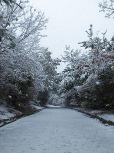 雪道の写真素材 [FYI00231569]