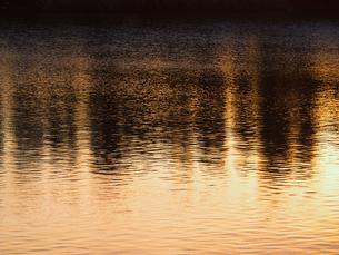 川面に映る金色と黒の写像の写真素材 [FYI00231571]