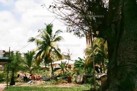ザンジバル島の素材 [FYI00231628]