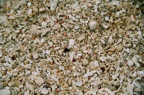 貝殻の素材 [FYI00231635]