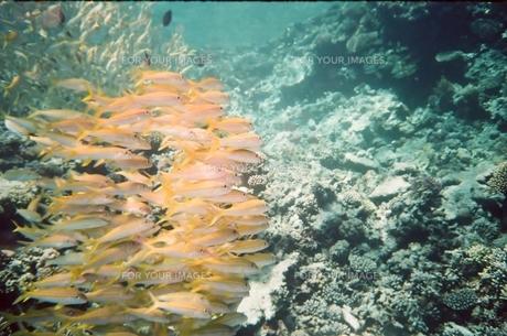 魚群とサンゴ礁の素材 [FYI00231654]