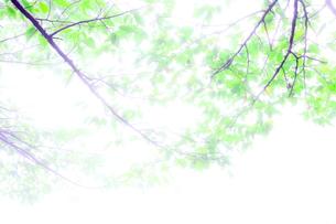霧葉の写真素材 [FYI00231679]