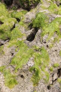 海藻の素材 [FYI00231680]