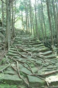 熊野古道の素材 [FYI00231682]