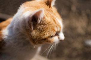 ネコの写真素材 [FYI00231717]