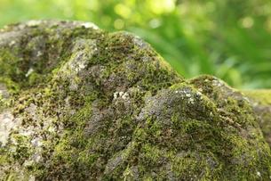 苔の写真素材 [FYI00231725]