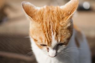 ネコの写真素材 [FYI00231736]
