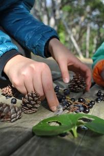 植物採集の子供の写真素材 [FYI00231743]