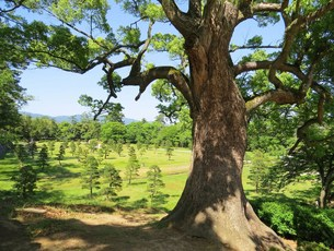 木々の写真素材 [FYI00231893]
