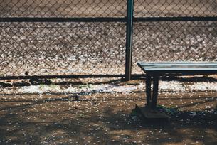 春のベンチの写真素材 [FYI00232064]