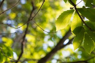新緑の写真素材 [FYI00232065]