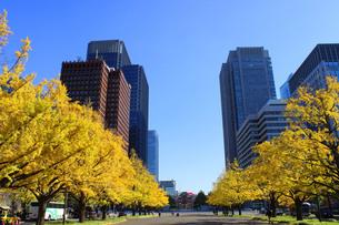 東京駅の紅葉の写真素材 [FYI00232069]